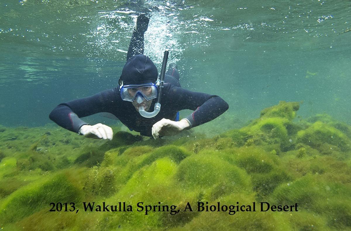 alge diver