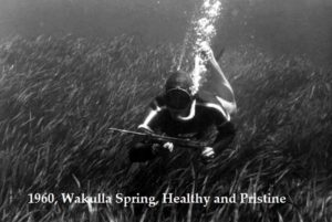 1960-wakulla-caption-enlarged