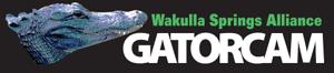 wakulla-springs-gatorcam